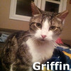 Griffin was adopted from the Cat House and Adoption Center on Saturday, April 5, 2014.<br /> <br /> Griffin<br /> <br /> Fire Department drop out.<br /> <br /> Unable to free himself from the collar he was trapped in, he was left with a severe injury to his underarm and weight loss. He did earn a badge of courage. He wants constant companionship and an indoor home.