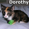 Dorothy was adopted from her foster home on Monday, July 21, 2014.<br /> <br /> Dorothy<br /> <br /> There's no place like home.<br /> <br /> She will click her heels and tap her toes to show off how lucky you will be to have her as your forever friend. She will blow you away with her wonderfulness.