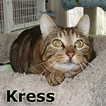 Kress was adopted from the Cat House and Adoption Center on Saturday, July 5, 2014.<br /> <br /> Kress<br /> <br /> Intense!<br /> <br /> Kress is extremely aware of his surroundings and everything you are doing and, if you need surveillance patrol in your home, Kress is your guy. Intelligent and handsome and ready to move onto a forever home.