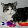 Griffin was adopted from the Cat House and Adoption Center on Saturday, July 26, 2014.