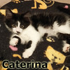 Catarina and Bella (sisters) were adopted from the Cat House and Adoption Center on Sunday, July 27, 2014.<br /> <br /> Caterina<br /> <br /> If you love her she will love you. With such a sweet face, Caterina has the purrsonality to match. Fluffy and fun, she is the whole package.