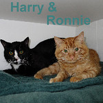 Harry and Ronnie were adopted from the Cat House and Adoption Center on Monday, June 9, 2014