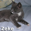 Zeke and Hunk (brothers) were adopted from the Cat House and Adoption Center on Saturday, July 12, 2014.
