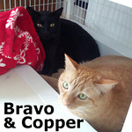Bravo and Copper (brother and sister) were adopted together from the Cat House and Adoption Center on Saturday, May 31, 2014.