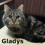 Gladys was adopted from the Cat House and Adoption Center on Saturday, May 24, 2014.<br /> <br /> Gladys<br /> <br /> We heard it through the grapevine.<br /> <br /> This young thing has raised her pips and is ready to sing her sweet heart out with musical purrs and affection in her very own home.