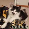 Rafaele was adopted from the Cat House and Adoption Center on Saturday, July 26, 2014.