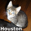 ZZ Kat and Houston (mother and son) were adopted together from their foster home on Wednesday, June 18th, 2014.<br /> <br /> Houston<br /> <br /> No problem here.<br /> <br /> Fix'in to find himself a home to hang his hat in. To be sure, Houston may be a little guy now, but will grow into a long tall fellow whose bigger 'n Dallas.