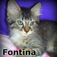 Fontina was adopted from the Cat House and Adoption Center on Saturday, November, 15th, 2014<br /> <br /> Fontina<br /> <br /> Soft and bold.<br /> <br /> Although this girl loves to romp and play, she will also adore your affectionate pets and kisses.She will often go off to explore her own path but always comes back to enjoy a nap at your side. She is a gentle beauty with a loving yet independent spirit.