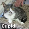 Cupid was adopted from the Cat House and Adoption Center on Saturday, February 28, 2015.