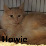Howie was adopted from the Cat House and Adoption Center on Saturday, December 13, 2014.