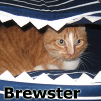 Brewster was adopted from the Cat House and Adoption Center on Saturday, February 7, 2015.<br /> <br /> Brewster.<br /> <br /> Dumped due to move!<br /> <br /> Brewster is such a sweet and kind soul just wanting to know stability at this time in his life. Moving is no excuse to hide your guilt and Brewster knows first hand that life was about to end when he was transferred.