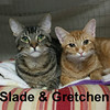 Slade and Gretchen Gracie<br /> <br /> Slade and Gretchen (brother and sister) were adopted from the Cat House and Adoption Center on Saturday, February 14, 2015.  <br /> <br /> Orphaned dumplings.<br /> <br /> 2015 started off tragically with the loss of their human companion, although it is no doubt going to end happily. Not too many people could deny that these two darling kitties wouldn't bring a great joy into their lives.