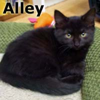 Alley was adopted from the Cat House and Adoption Center on Saturday, February 14, 2015.