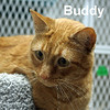 Buddy was adopted from the Cat House and Adoption Center on Saturday, April 4, 2015.<br /> <br /> Buddy<br /> <br /> Who's your buddy?<br /> <br /> Unfortunate in losing one family, Buddy knows that he has a great personality and will remain pawsitive until his lucky day. Buddy's gentle and kind soul will make him hard to over look, and everyone needs to have Buddy in their life.