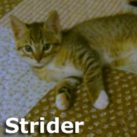 Strider was adopted from his foster home on Saturday, November 21st, 2014.