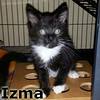 Izma was adopted from the Cat House and Adoption Center on Saturday, January 10, 2015.