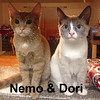 Dori and Nemo (brother and sister) were adopted together from the Cat House and Adoption Center on Thursday, February 26, 2015.