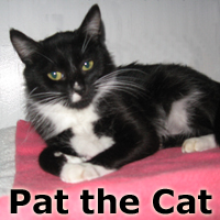 Pat the Cat was adopted at the Cat House and Adoption Center on Saturday, December 6, 2014.<br /> <br /> Pat the Cat<br /> <br /> Feel her soft fur.<br /> <br /> She is smart and took the sensory approach to scope out her surroundings, and chose a kind person to beg food from. She is a beggar no more.