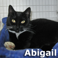 Abigail Honey was adopted from the Cat House and Adoption Center on Saturday, December 27, 2014.