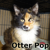 Otter Pop was adopted from the Cat House and Adoption Center on Saturday, December 20, 2014.