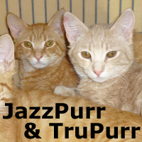 JazzPurr and TruPurr (brothers) were adopted from their foster home on Wednesday January 14, 2015.