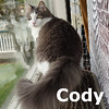 Cody (Rowdy) was adopted from the Cat House and Adoption Center on Friday, May 1, 2015.<br /> <br /> Cody (Rowdy)<br /> <br /> Handsome and helpful.<br /> <br /> Cody is ready to be part of a family and help to keep life on an even keel. He is great as a calming presence and is very sweet to snuggle with and yet he is always ready for a little playtime