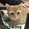 PurrKins was adopted from his foster home at South Bay Veterinary Hospital on Wednesday, March 4, 2015.