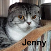 Jenny was adopted from the Cat House and Adoption Center on Saturday November 15th, 2014.<br /> <br /> Jenny<br /> <br /> Who says my ears are flat?!<br /> <br /> Just bred to have ears that are flattened, Jenny is a special senior Scottish Fold. Her owner's death changed her life, Jenny is adjusting to temporary accommodations although we know she misses her brothers (Dachshunds) while she waits for a new loving owner.