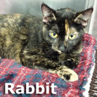 Rabbit was adopted from the Cat House and Adoption Center on Saturday, January 3, 2015.