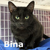 Bina was adopted from the Cat House and Adoption Center on Saturday, May 2, 2015.<br /> <br /> Bina<br /> <br /> Colorful.<br /> <br /> This beautiful black girl is more colorful than she appears. She is full of life and ready to share yours with you. She has lots to share in conversations and can be quite entertaining.