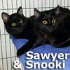 Sawyer and Snooki (brother and sister) were adopted from the Cat House and adoption Center on Saturday, March 21, 2015.