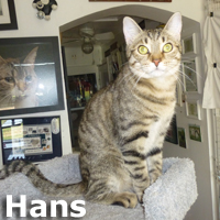 Hans and Lincoln were adopted from the Cat House and Adoption Center on Saturday, December 20, 2014.<br /> <br /> Hans<br /> <br /> Always in motion.<br /> <br /> The world is his playground and he is going to keep you on your toes. He can blend in or stand out, depending on what surrounds him. A playmate is a must and your home is his arena and you are the referee.