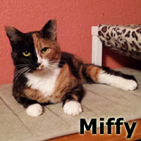 Miffy was adopted from her foster home at South Bay Veterinary Hospital on Tuesday, December 2, 2014.<br /> <br /> Miffy<br /> <br /> Cowgirl leaves boots in the barn!<br /> <br /> Forced to be an inside cat from an injury that happened causing her to loose one of her hind legs, and she purred right through the surgery. Miffy has healed well and is awaiting an INDOOR ONLY forever home.
