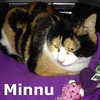 Minnu was adopted from the Cat House and Adoption Center on Saturday, April 11, 2015.