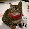 Smitty was adopted from Steamboat Animal Hospital on December 24, 2014.