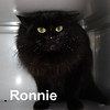Ronnie, Gene and Cheryl were adopted as a Mother and two siblings today from the Cat House and Adoption Center on Sunday, February 15, 2015.