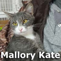 Mallory Kate was adopted from the Cat House and Adoption Center on Saturday March 14th, 2015.