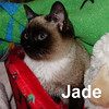 Jade was adopted from her foster home at the Cat House and Adoption Center on Friday, March 20, 2015