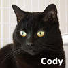 Cody was adopted from the Cat House and Adoption Center on Saturday, May 16, 2015.<br /> <br /> Cody<br /> <br /> Calling Dr. Bombay.<br /> <br /> This bewitching girl with her big bold eyes will put her spell on you and win your heart with her tenacious personality. Cody is awaiting your visit.