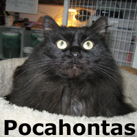 Pocahontas was adopted from the Cat House and Adoption Center on Sunday, January 25, 2015.<br /> <br /> Pocahontas<br /> <br /> Let's do the Polka!<br /> <br /> She is all in. Poka came in, decided it was the smartest move she ever made and is at peace indoors. She thinks fuzzy blankets are the greatest and will knead them with her little pink tongue sticking out.
