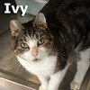 Ivy was adopted from the Cat House and Adoption Center on Saturday, April 18, 2015.<br /> <br /> Ivy<br /> <br /> Climbing up.<br /> <br /> An amazing sweet lady that has changed paths in this world and knows what way to climb to get to the top. Ivy is very sweet and clings to the fact that she will add a lot of joy to your life every day.