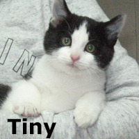 Tiny was adopted from the Cat House and Adoption Center on Saturday November 15th, 2014.
