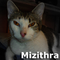 """Mizithra was adopted from the Cat House and Adoption Center on Saturday, December 13, 2014.<br /> <br /> Mizithra - aka """"Momma Mitzy""""<br /> <br /> A regal queen.<br /> <br /> This doting mother has had it rough so far but never lets it show. Always there to greet you with loving rubs and meows, this is a devoted lady who will be by your side for life. She is happy and peaceful to the core, and her joy for life is contagious. She makes each day a little more special."""