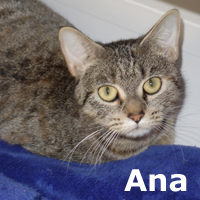 Ana was adopted from the Cat House and Adoption Center on Tuesday, January 27, 2015.<br /> <br /> Ana<br /> <br /> Gracious Girl<br /> <br /> Glad to be safe, confused as to where she is and so thankful to get love and attention. This special girls is very sweet, beautifully marked and how she could be left behind is beyond us. Selling a house does not mean that the cat is part of the property...she is a living being folks.