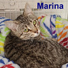 Marina was adopted from the Cat House and Adoption Center on Saturday, February 7, 2015.