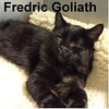 Fredric Goliath was adopted from the Cat House and Adoption Center on Saturday, January 15, 2015.