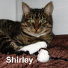 Laverne and Shirley were adopted from the Cat House and Adoption Center on Sunday, May 10, 2015.<br /> <br /> Laverne and Shirley<br /> <br /> Schlemiel! Schlimazel! Hasenpfeffer Incorporated.<br /> <br /> Adorable and awaiting a new home together to bring back their Happy Days and yours! Siblings, these two girls are ready to fill your home with happiness, hours of laughter and endless love. Are you ready?