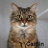 Caitlin was adopted from the Cat House and Adoption Center on Sunday, March 22, 2015.