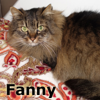 Fanny was adopted from the Cat House and Adoption Center on Saturday, February 14, 2015.    <br /> <br /> Fanny<br /> <br /> 12th Fan<br /> <br /> Forever fluffy and incredibly sweet with a shyness that is endearing. Behind this fluffy coat is a petite little girl with a lot of personality and huge heart. She soaks up all the love you can give ... do you have love to give?