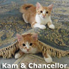 Kam and Chancellor were adopted from the Cat House and Adoption Center on Saturday, February 14, 2015.<br /> <br /> Kam and Chancellor<br /> <br /> What a team.<br /> <br /> These two boys have their winning strategy all figured out. With their strong defensive skills, they make sure all their toys are safe. Can you provide their forever home field advantage?